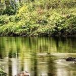 Dart River at Holne Chase