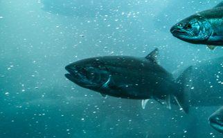 Webinar: Canada Bill C-69 Fisheries Act